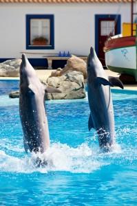 Dolphin_show_in_Lisbon_Zoo_01